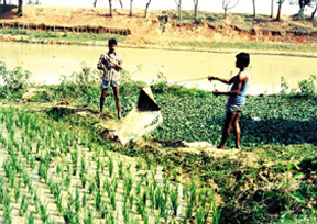 Irrigation Banglapedia