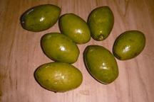 File:Olive.jpg