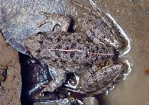 FrogToad3.jpg
