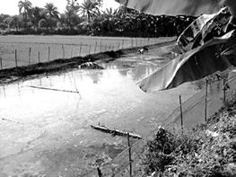 Fisheries - Banglapedia
