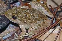 FrogToad1.jpg