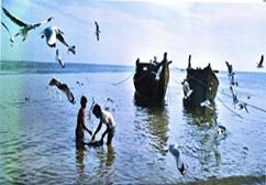 FisheriesSea3.jpg
