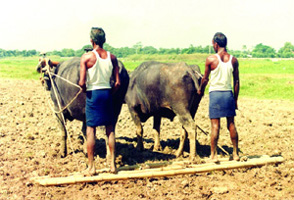 give traditional tools used in farming