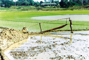File:IrrigationDoon.jpg